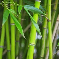 bamboe boxershorts